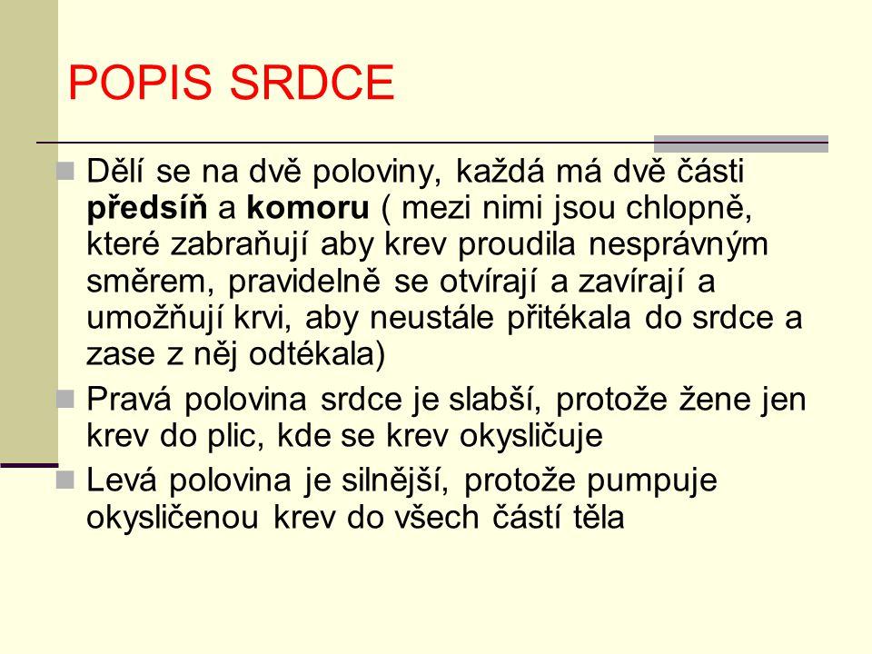 POPIS SRDCE Dělí se na dvě poloviny, každá má dvě části předsíň a komoru ( mezi nimi jsou chlopně, které zabraňují aby krev proudila nesprávným směrem