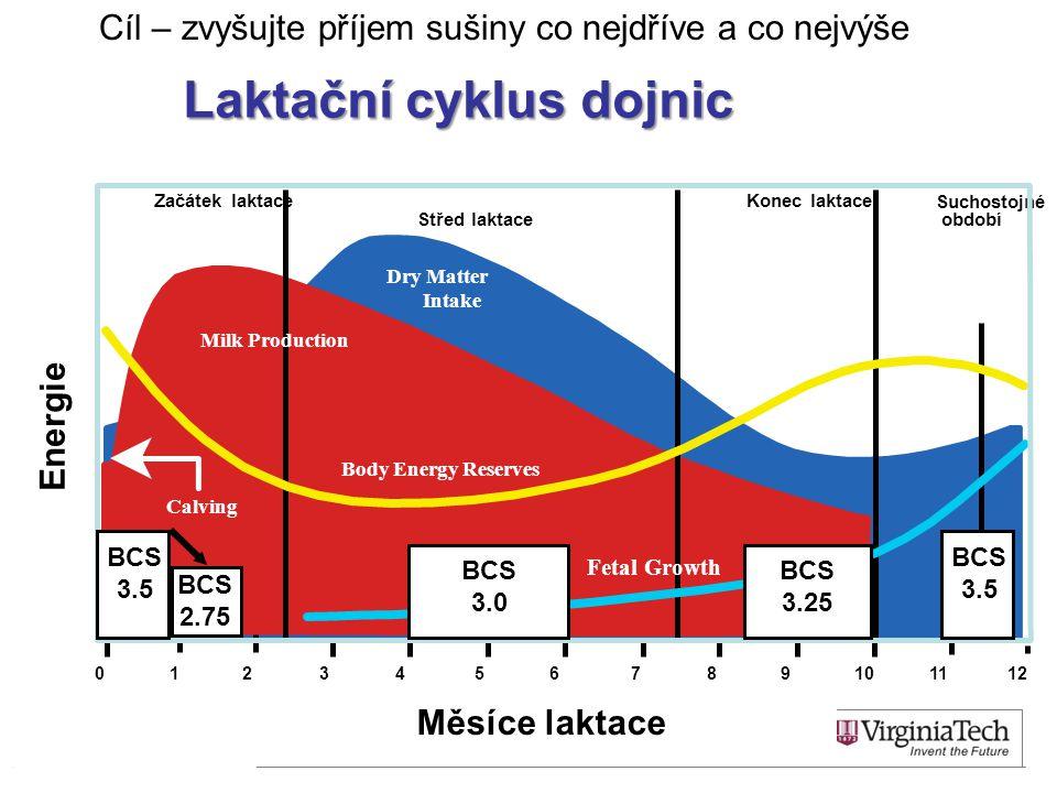 Začátek laktace Střed laktace Konec laktace Suchostojné období Měsíce laktace 0123456789101112 Milk Production Body Energy Reserves Calving Dry Matter Intake Fetal Growth Laktační cyklus dojnic Energie BCS 3.5 BCS 2.75 BCS 3.0 BCS 3.25 BCS 3.5 Cíl – zvyšujte příjem sušiny co nejdříve a co nejvýše