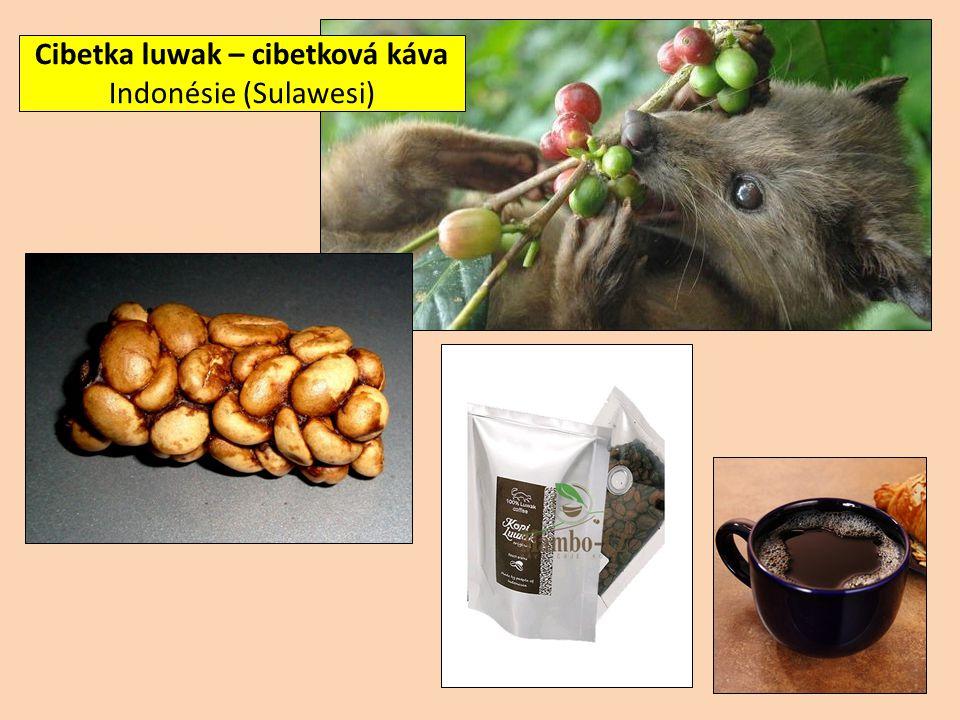 Cibetka luwak – cibetková káva Indonésie (Sulawesi)