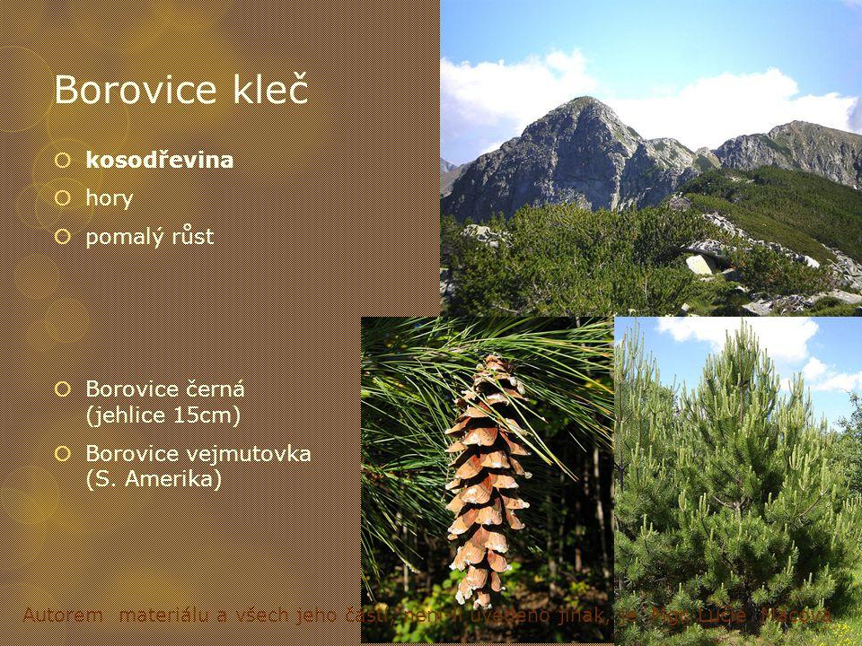 Borovice kleč  kosodřevina  hory  pomalý růst  Borovice černá (jehlice 15cm)  Borovice vejmutovka (S. Amerika) Autorem materiálu a všech jeho čás
