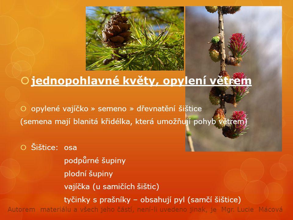  jednopohlavné květy, opylení větrem  opylené vajíčko » semeno » dřevnatění šištice (semena mají blanitá křidélka, která umožňují pohyb větrem)  Šištice:osa podpůrné šupiny plodní šupiny vajíčka (u samičích šištic) tyčinky s prašníky – obsahují pyl (samčí šištice) Autorem materiálu a všech jeho částí, není-li uvedeno jinak, je Mgr.