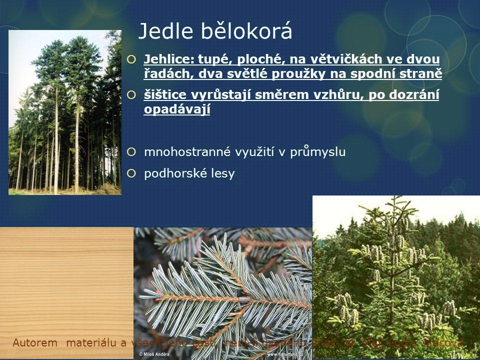 Jedle bělokorá  Jehlice:tupé, ploché, na větvičkách ve dvou řadách, dva světlé proužky na spodní straně  šištice vyrůstají směrem vzhůru, po dozrání opadávají  mnohostranné využití v průmyslu  podhorské lesy Autorem materiálu a všech jeho částí, není-li uvedeno jinak, je Mgr.