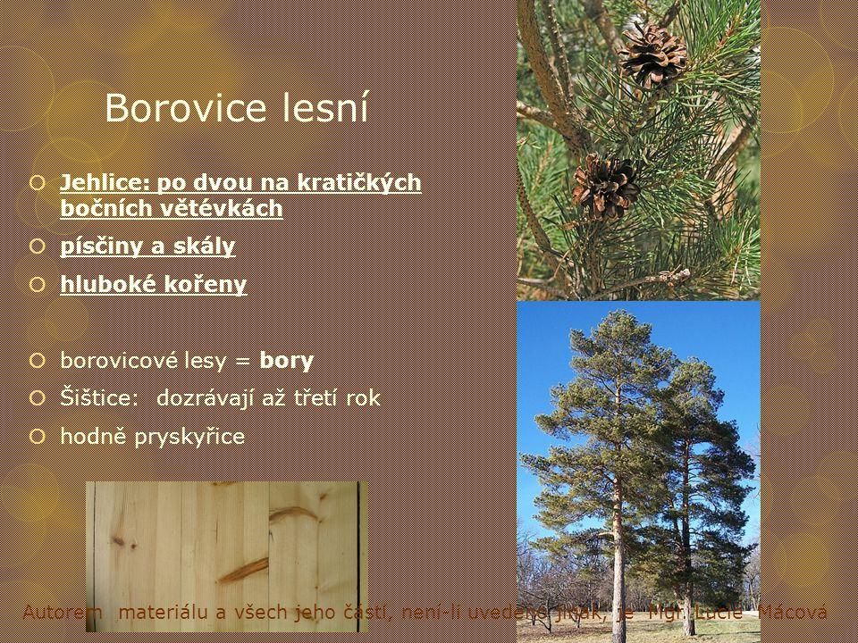 Borovice lesní  Jehlice:po dvou na kratičkých bočních větévkách  písčiny a skály  hluboké kořeny  borovicové lesy = bory  Šištice:dozrávají až tř