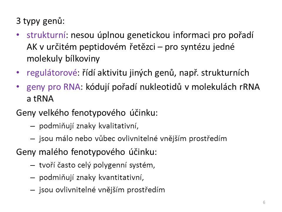 3 typy genů: strukturní: nesou úplnou genetickou informaci pro pořadí AK v určitém peptidovém řetězci – pro syntézu jedné molekuly bílkoviny regulátor