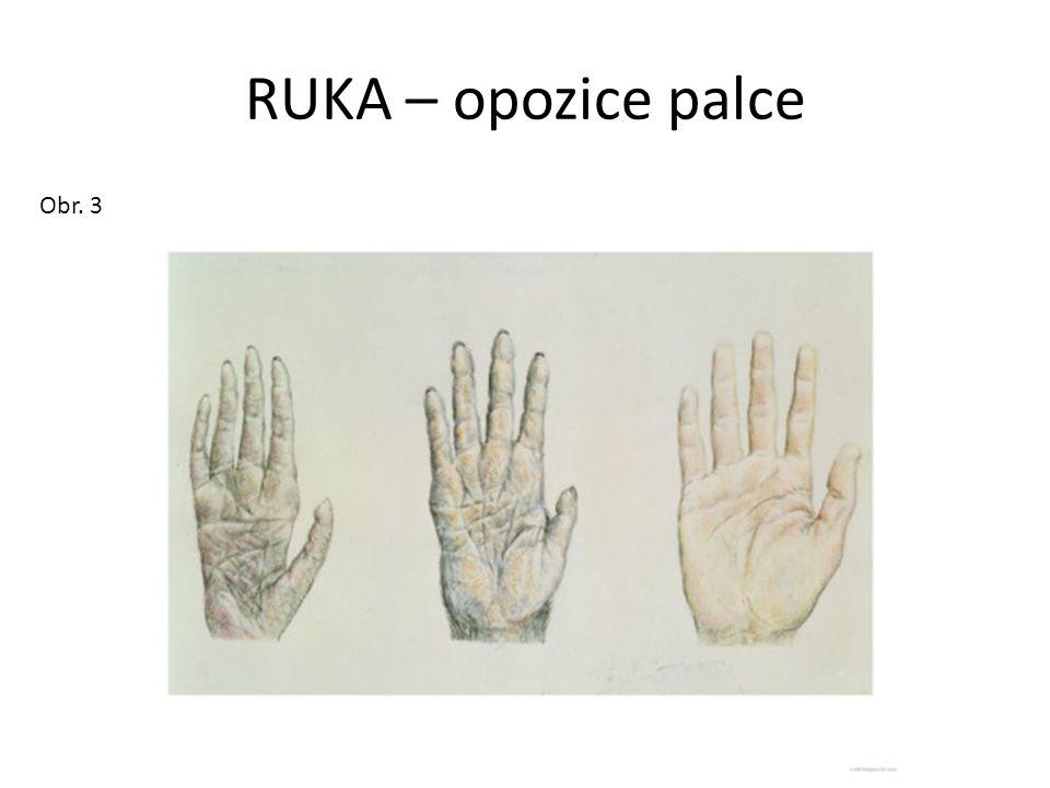 RUKA – opozice palce Obr. 3