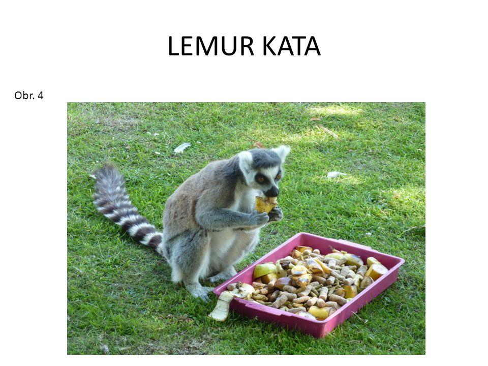 LEMUR KATA Obr. 4
