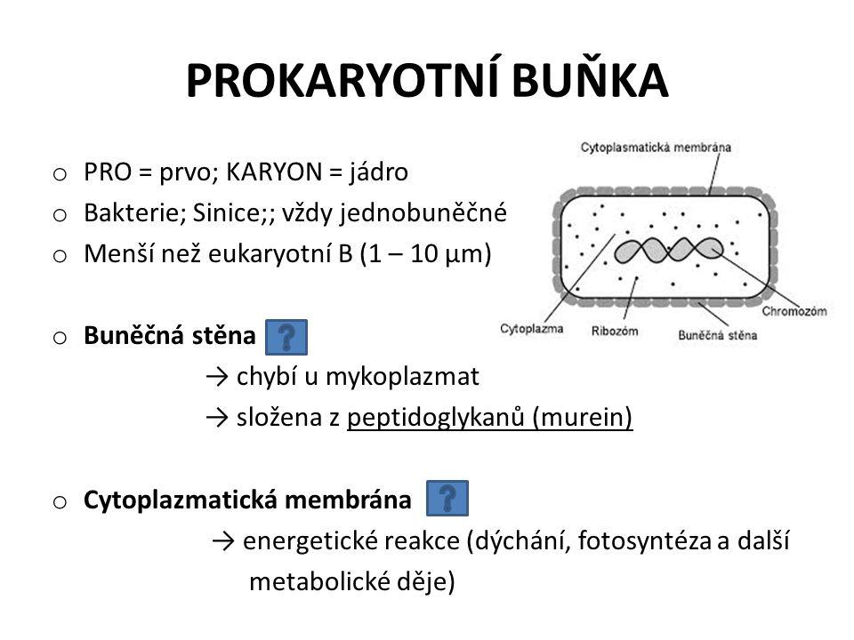 o PRO = prvo; KARYON = jádro o Bakterie; Sinice;; vždy jednobuněčné o Menší než eukaryotní B (1 – 10 µm) o Buněčná stěna → chybí u mykoplazmat → slože