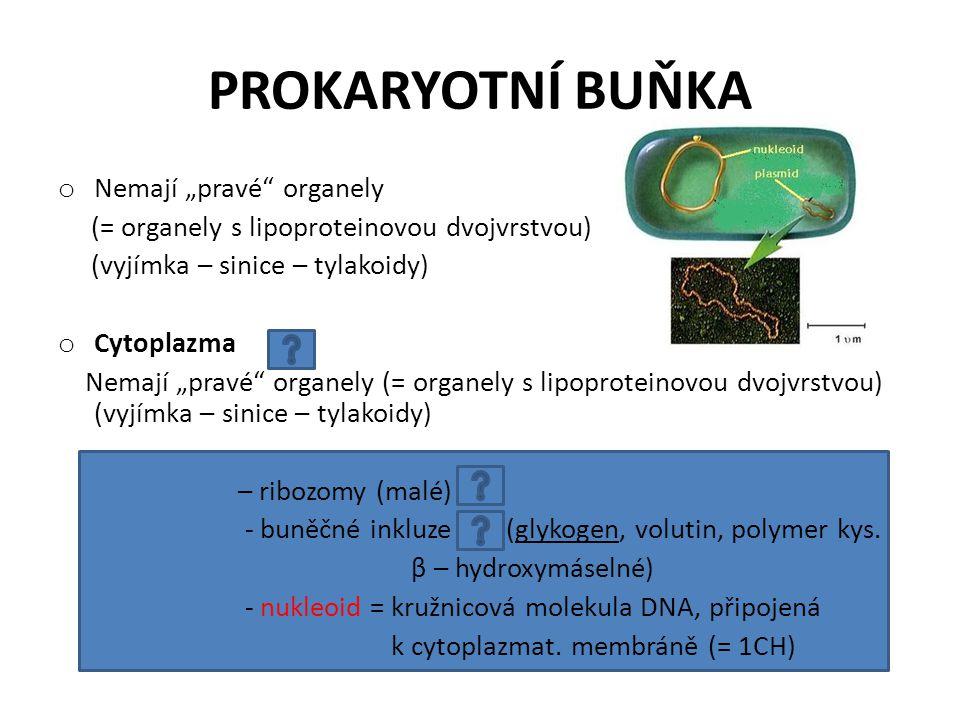 """PROKARYOTNÍ BUŇKA o Nemají """"pravé"""" organely (= organely s lipoproteinovou dvojvrstvou) (vyjímka – sinice – tylakoidy) o Cytoplazma Nemají """"pravé"""" orga"""
