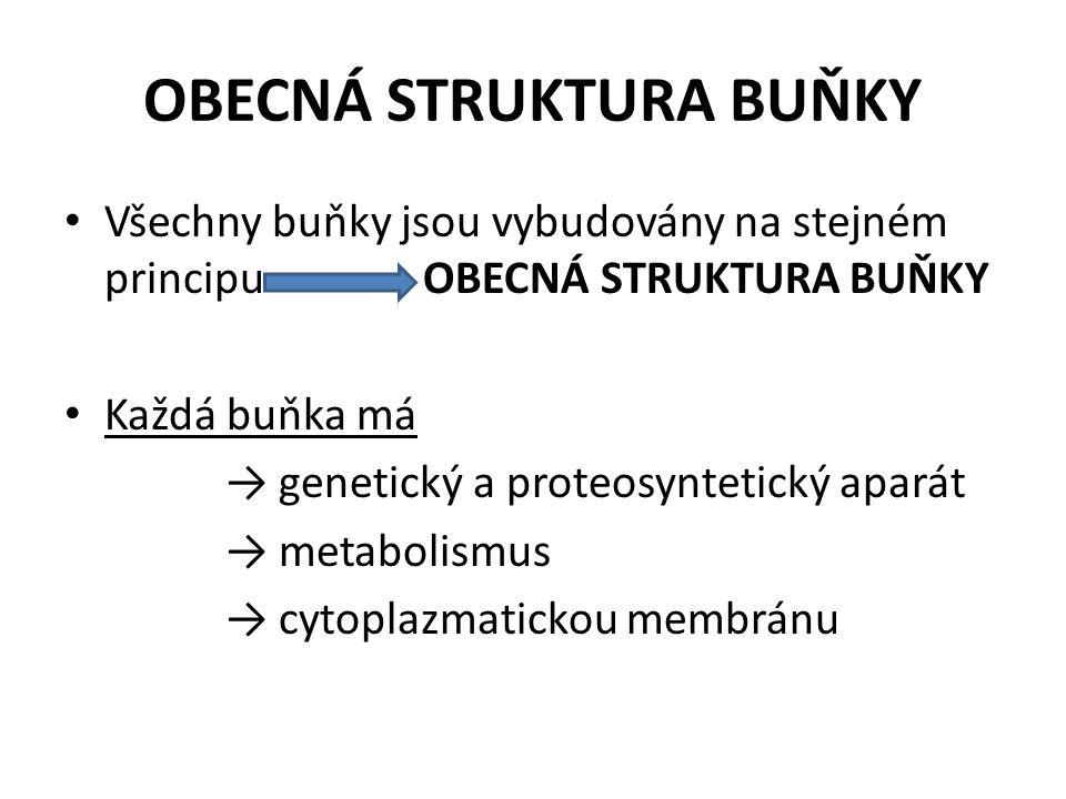 OBECNÁ STRUKTURA BUŇKY Všechny buňky jsou vybudovány na stejném principu OBECNÁ STRUKTURA BUŇKY Každá buňka má → genetický a proteosyntetický aparát →