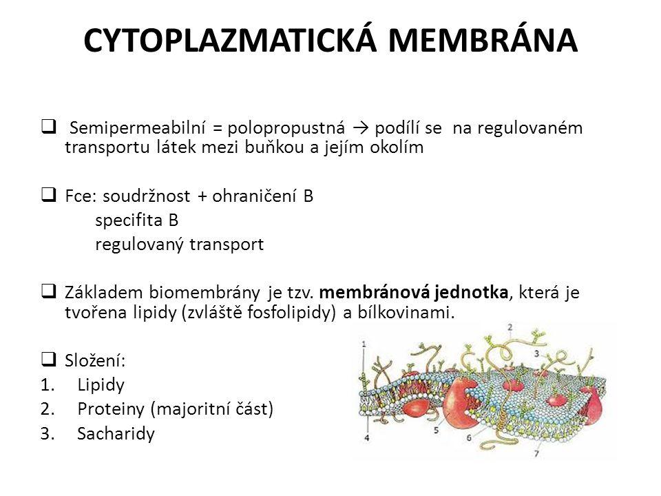 CYTOPLAZMATICKÁ MEMBRÁNA  Semipermeabilní = polopropustná → podílí se na regulovaném transportu látek mezi buňkou a jejím okolím  Fce: soudržnost +