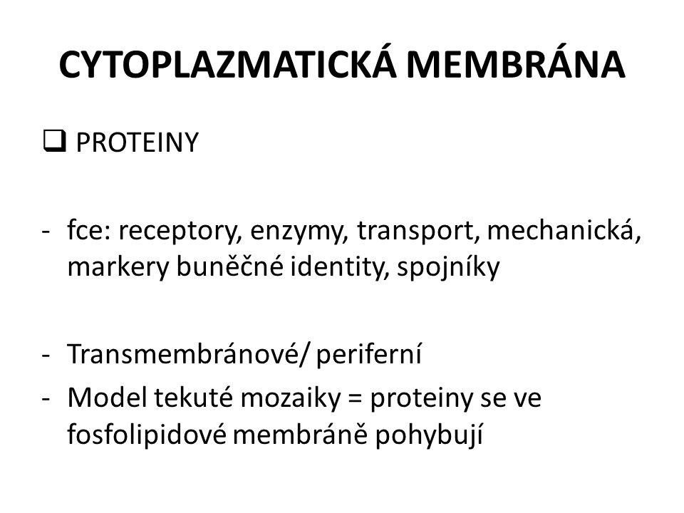 CYTOPLAZMATICKÁ MEMBRÁNA  PROTEINY -fce: receptory, enzymy, transport, mechanická, markery buněčné identity, spojníky -Transmembránové/ periferní -Mo