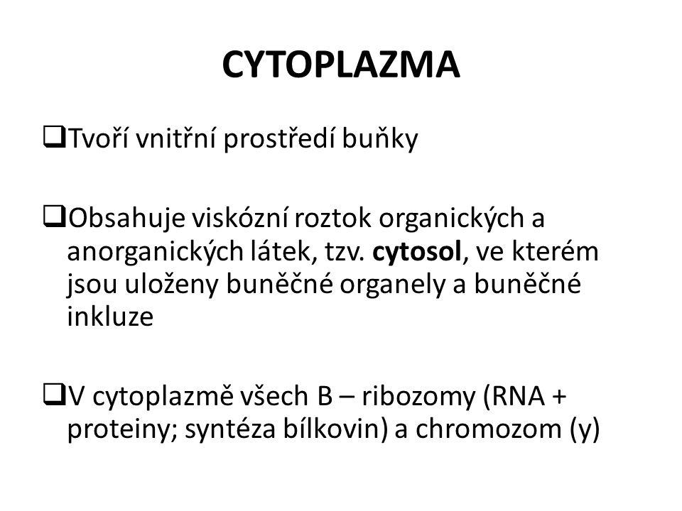 CYTOPLAZMA  Tvoří vnitřní prostředí buňky  Obsahuje viskózní roztok organických a anorganických látek, tzv. cytosol, ve kterém jsou uloženy buněčné