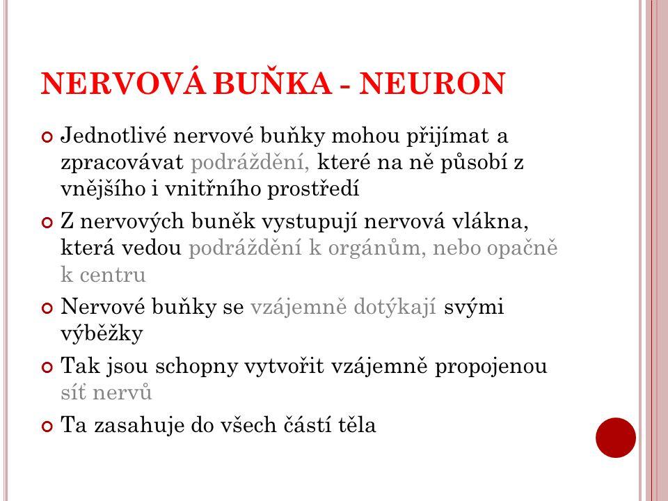NERVOVÁ BUŇKA - NEURON Jednotlivé nervové buňky mohou přijímat a zpracovávat podráždění, které na ně působí z vnějšího i vnitřního prostředí Z nervový