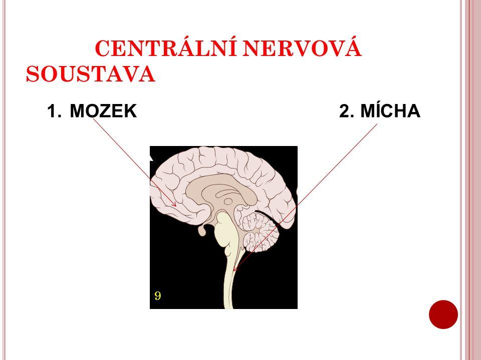 CENTRÁLNÍ NERVOVÁ SOUSTAVA 1. MOZEK 2. MÍCHA 9
