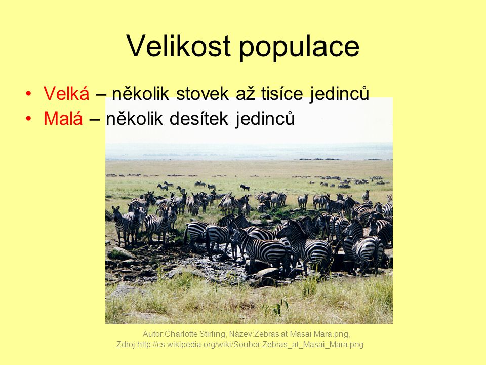Velikost populace Velká – několik stovek až tisíce jedinců Malá – několik desítek jedinců Autor:Charlotte Stirling, Název:Zebras at Masai Mara.png, Zdroj:http://cs.wikipedia.org/wiki/Soubor:Zebras_at_Masai_Mara.png