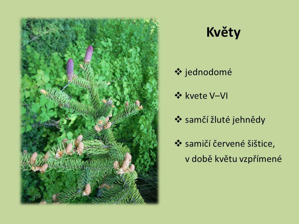 Květy  jednodomé  kvete V–VI  samčí žluté jehnědy  samičí červené šištice, v době květu vzpřímené
