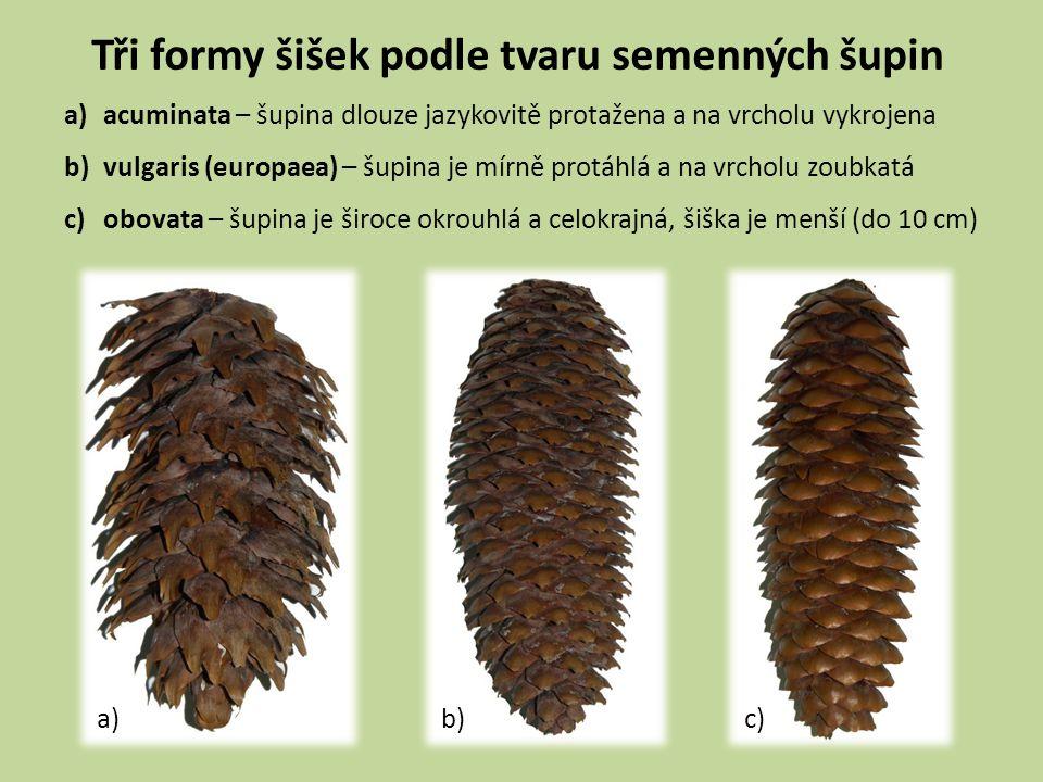 Tři formy šišek podle tvaru semenných šupin a)acuminata – šupina dlouze jazykovitě protažena a na vrcholu vykrojena b)vulgaris (europaea) – šupina je