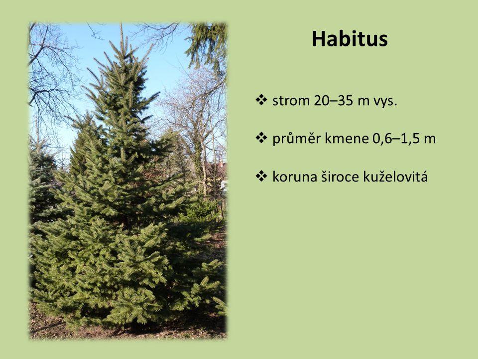 Habitus  strom 20–35 m vys.  průměr kmene 0,6–1,5 m  koruna široce kuželovitá