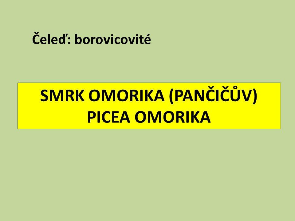 SMRK OMORIKA (PANČIČŮV) PICEA OMORIKA Čeleď: borovicovité