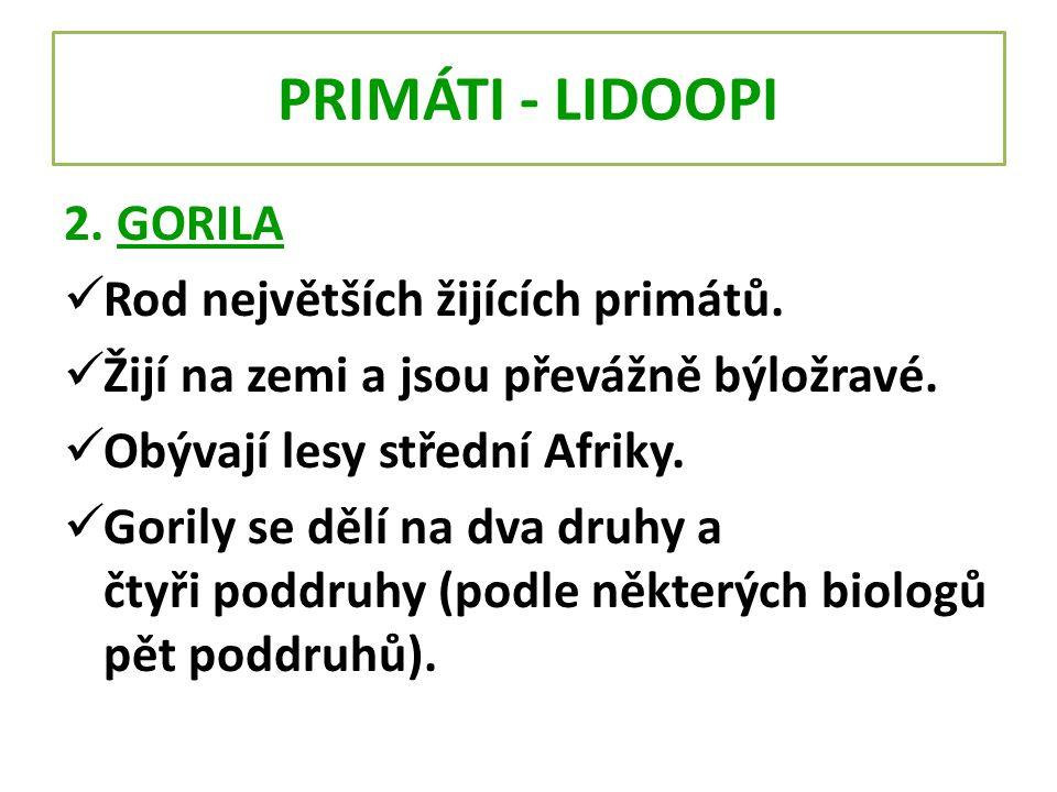 PRIMÁTI - LIDOOPI 2. GORILA Rod největších žijících primátů. Žijí na zemi a jsou převážně býložravé. Obývají lesy střední Afriky. Gorily se dělí na dv