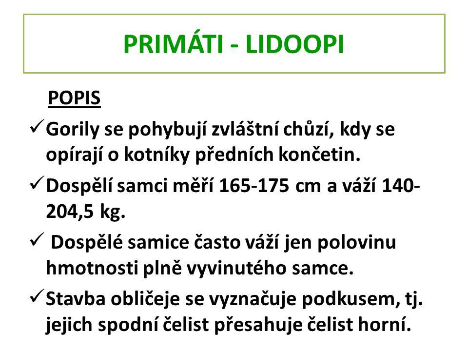 PRIMÁTI - LIDOOPI POPIS Gorily se pohybují zvláštní chůzí, kdy se opírají o kotníky předních končetin. Dospělí samci měří 165-175 cm a váží 140- 204,5