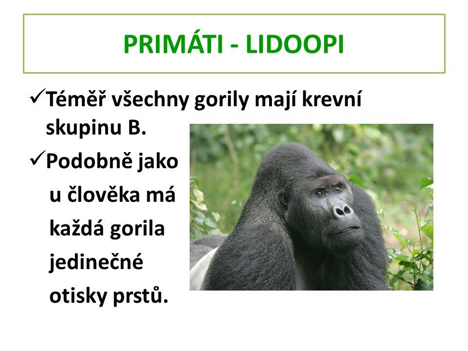 PRIMÁTI - LIDOOPI Téměř všechny gorily mají krevní skupinu B. Podobně jako u člověka má každá gorila jedinečné otisky prstů.
