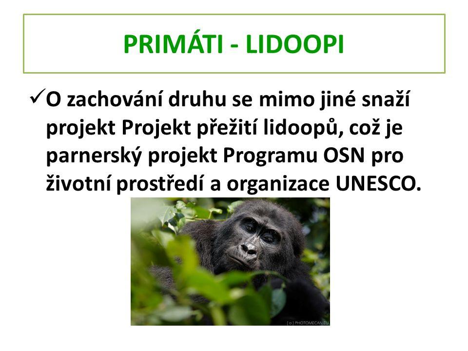 PRIMÁTI - LIDOOPI O zachování druhu se mimo jiné snaží projekt Projekt přežití lidoopů, což je parnerský projekt Programu OSN pro životní prostředí a