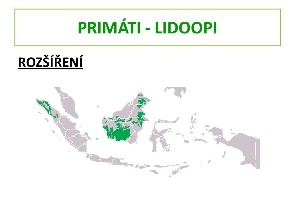 PRIMÁTI - LIDOOPI 2.GORILA Rod největších žijících primátů.