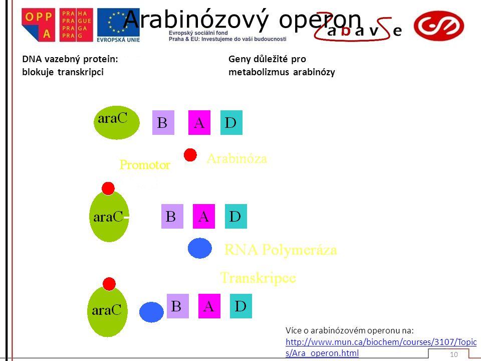 Arabinózový operon Více o arabinózovém operonu na: http://www.mun.ca/biochem/courses/3107/Topic s/Ara_operon.html DNA vazebný protein: blokuje transkripci Geny důležité pro metabolizmus arabinózy 10