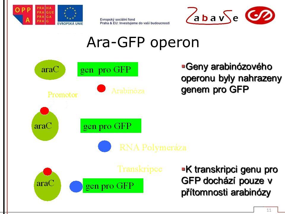 Ara-GFP operon  Geny arabinózového operonu byly nahrazeny genem pro GFP  K transkripci genu pro GFP dochází pouze v přítomnosti arabinózy  11