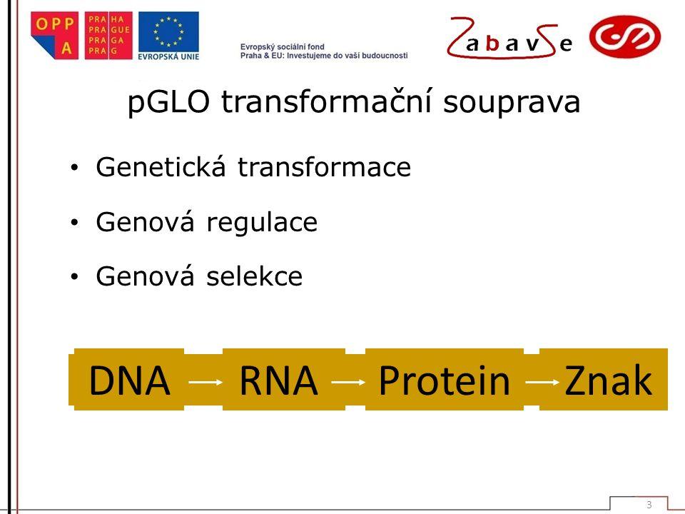 pGLO transformační souprava Genetická transformace Genová regulace Genová selekce DNARNAProtein Znak 3