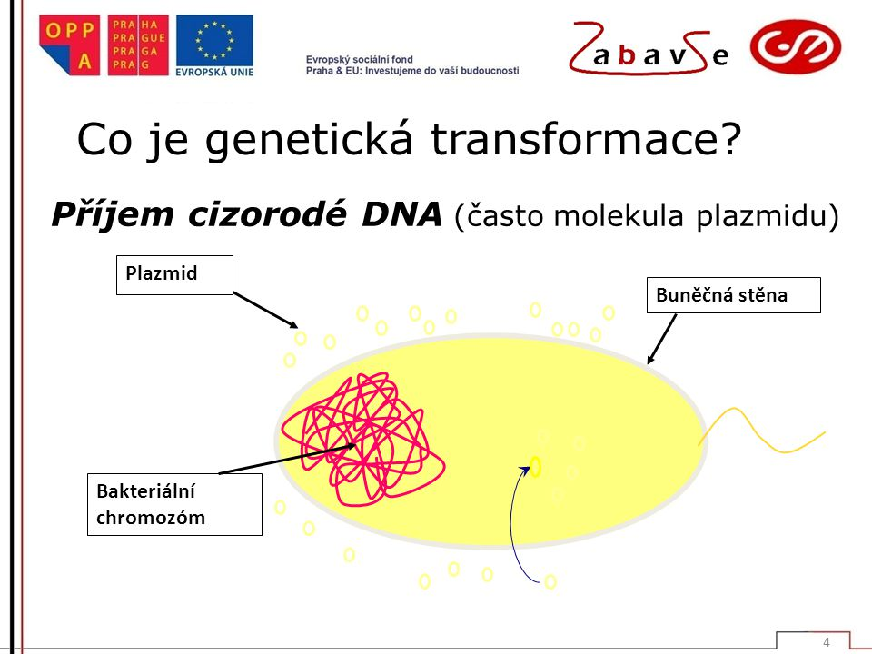 Co je genetická transformace.