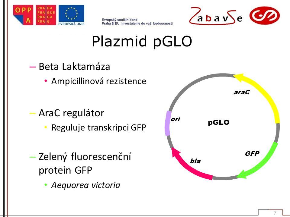Plazmid pGLO – Beta Laktamáza Ampicillinová rezistence – AraC regulátor Reguluje transkripci GFP – Zelený fluorescenční protein GFP Aequorea victoria pGLO ori bla GFP araC 7