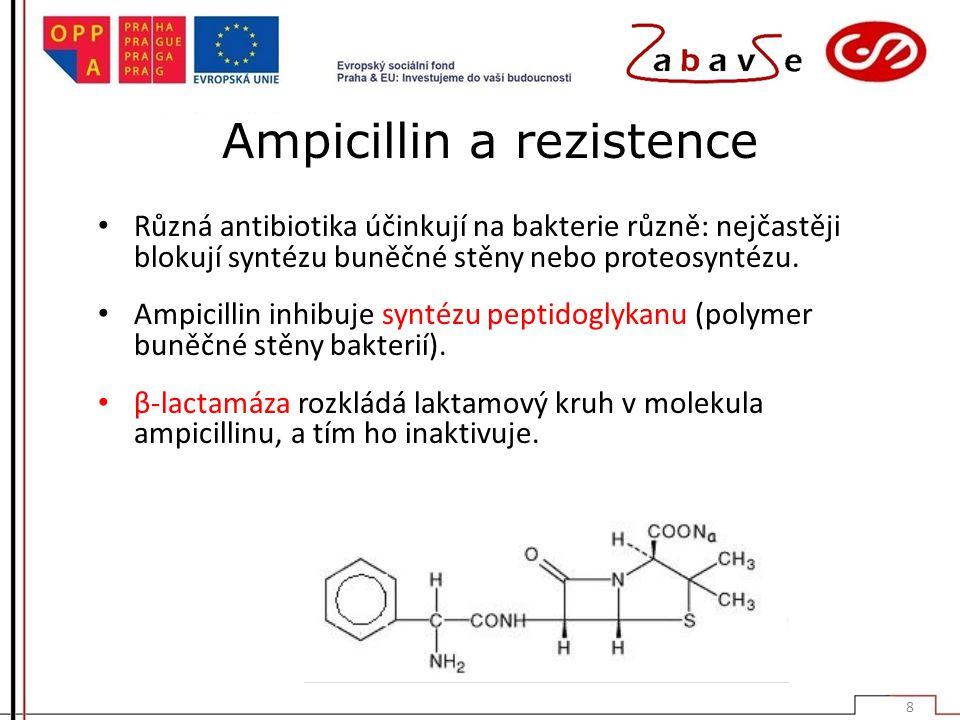 Ampicillin a rezistence Různá antibiotika účinkují na bakterie různě: nejčastěji blokují syntézu buněčné stěny nebo proteosyntézu.