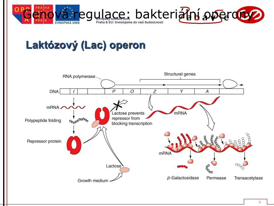 Genová regulace: bakteriální operony Laktózový (Lac) operon 9