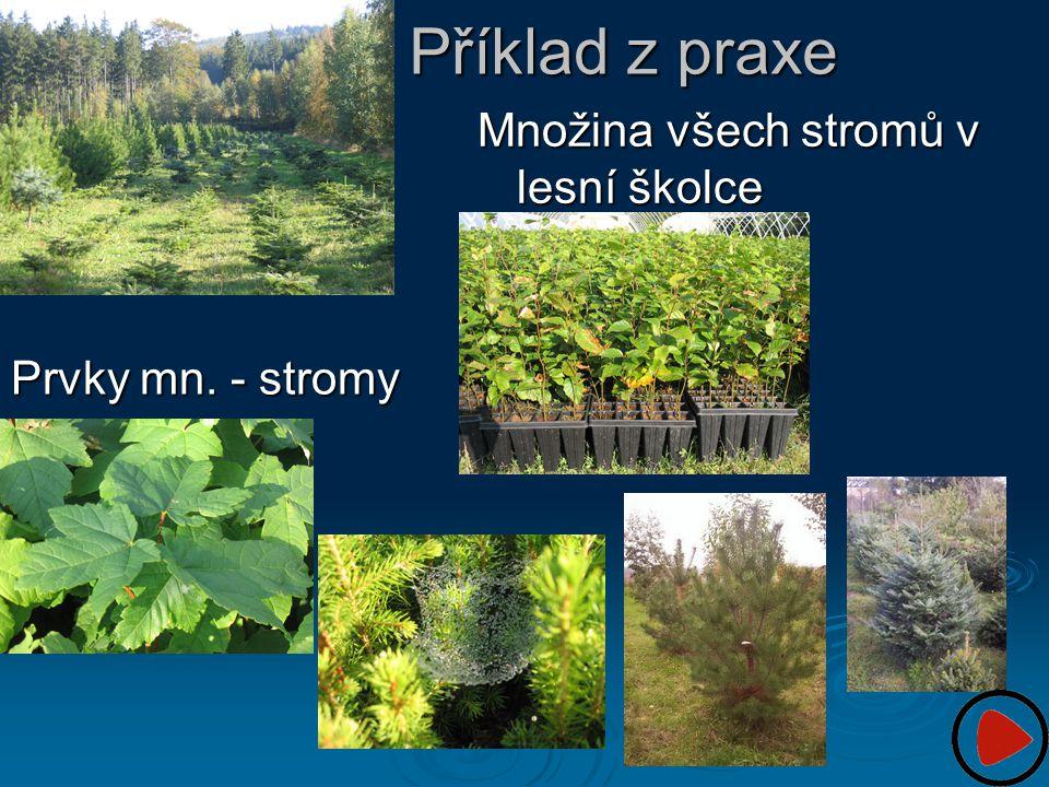 Příklad z praxe Prvky mn. - stromy Množina všech stromů v lesní školce