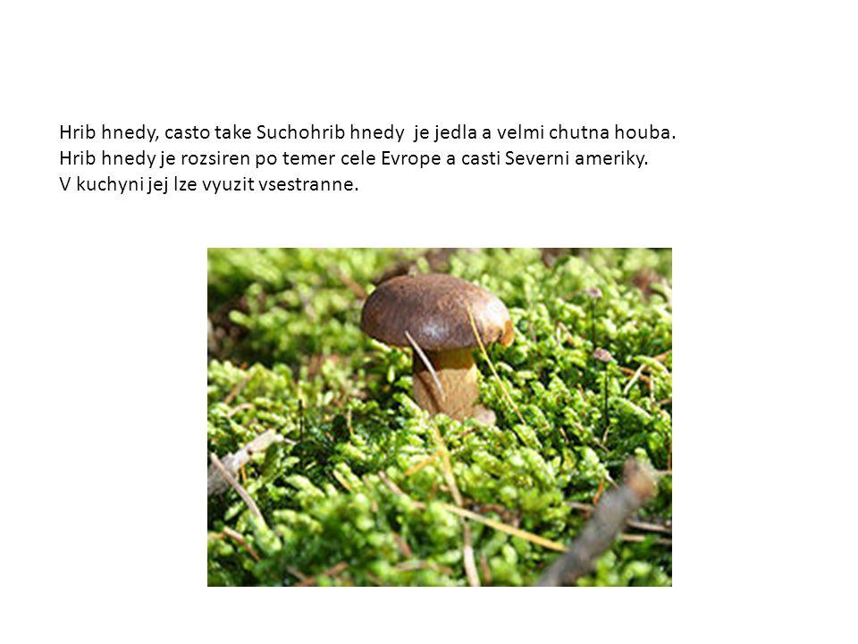 Hrib hnedy, casto take Suchohrib hnedy je jedla a velmi chutna houba. Hrib hnedy je rozsiren po temer cele Evrope a casti Severni ameriky. V kuchyni j