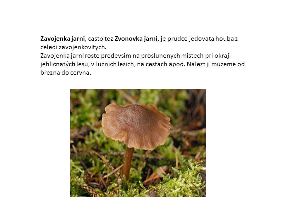 Zavojenka jarni, casto tez Zvonovka jarni, je prudce jedovata houba z celedi zavojenkovitych. Zavojenka jarni roste predevsim na proslunenych mistech