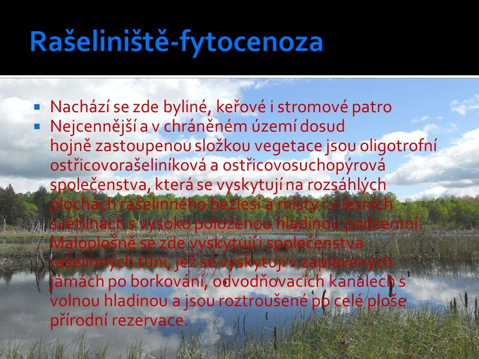  Nachází se zde byliné, keřové i stromové patro  Nejcennější a v chráněném území dosud hojně zastoupenou složkou vegetace jsou oligotrofní ostřicovo