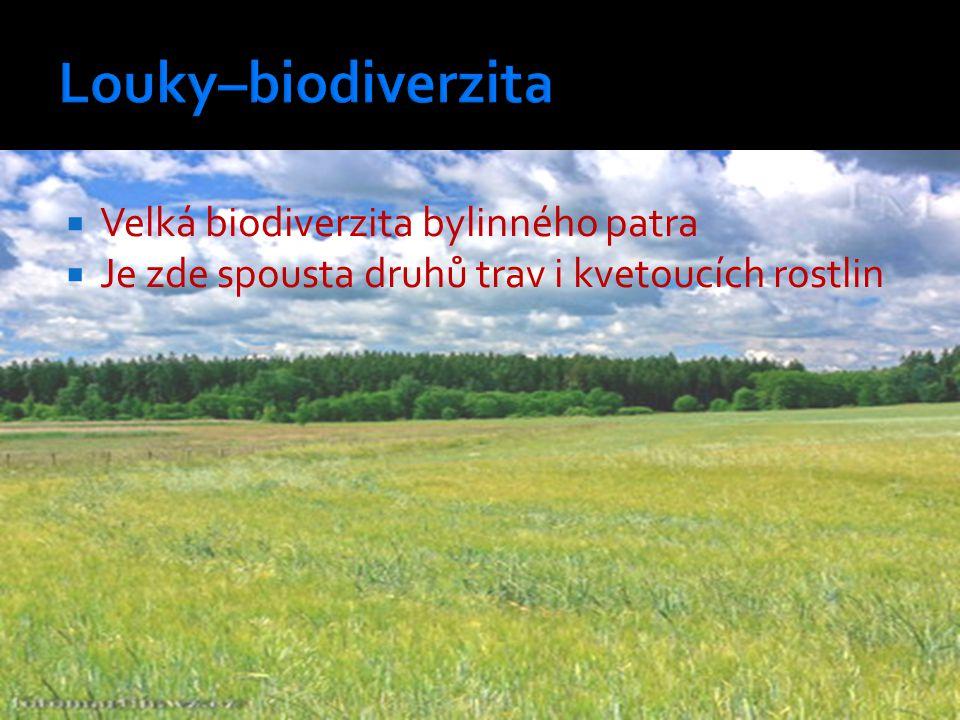  Velká biodiverzita bylinného patra  Je zde spousta druhů trav i kvetoucích rostlin