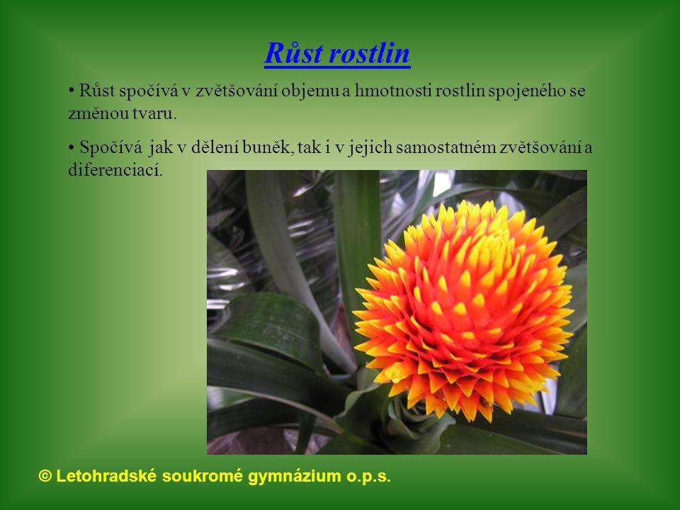 © Letohradské soukromé gymnázium o.p.s. Růst rostlin Růst spočívá v zvětšování objemu a hmotnosti rostlin spojeného se změnou tvaru. Spočívá jak v děl