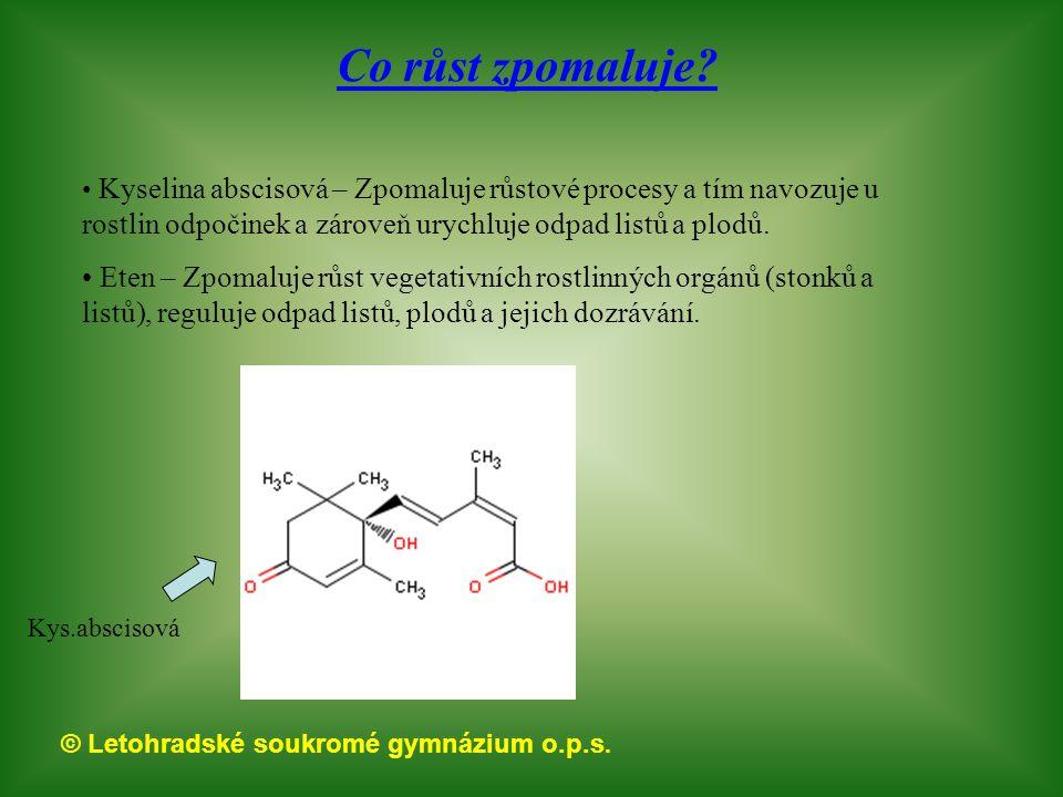 © Letohradské soukromé gymnázium o.p.s. Co růst zpomaluje? Kyselina abscisová – Zpomaluje růstové procesy a tím navozuje u rostlin odpočinek a zároveň