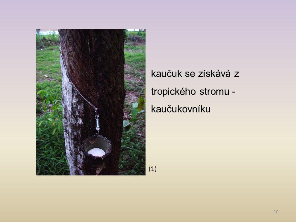 10 kaučuk se získává z tropického stromu - kaučukovníku (1)