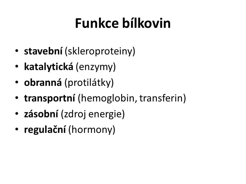 Funkce bílkovin stavební (skleroproteiny) katalytická (enzymy) obranná (protilátky) transportní (hemoglobin, transferin) zásobní (zdroj energie) regul