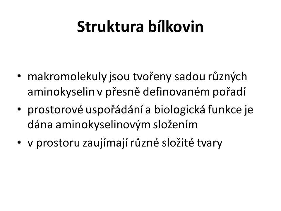 Struktura bílkovin často velké a prostorově složité molekuly proteinů popisujeme ve čtyřech úrovních: PRIMÁRNÍ STRUKTURA: udává pořadí aminokyselin v polypeptidickém řetězci, určuje vlastnosti bílkovin a jejich biologickou funkci SEKUNDÁRNÍ STRUKTURA: je dána prostorovým uspořádáním řetězce aminokyselin v prostoru; uspořádání může mít tvar: 1) α -helix (šroubovice) 2) skládaný list TERCIÁLNÍ STRUKTURA: je uspořádání α-helixu nebo skládaného listu do konečného prostorového tvaru molekuly bílkoviny KVARTÉRNÍ STRUKTURA: vzniká u složitých bílkovin, které se skládají z podjednotek