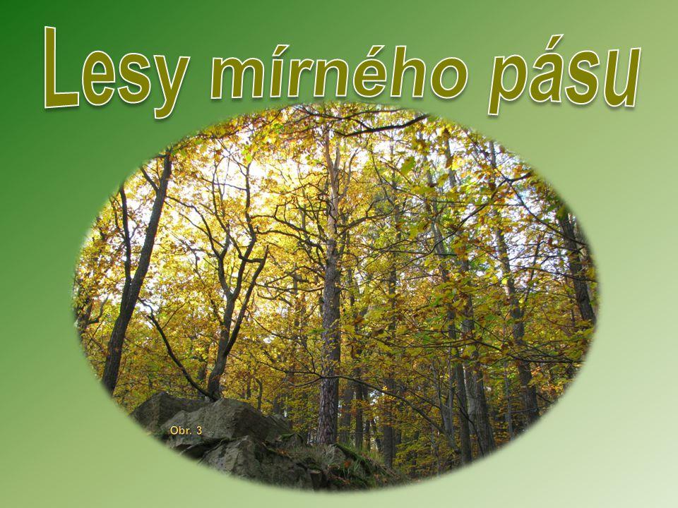 Lesy mírného pásu se rozkládají, jak jejich název napovídá, v mírném pásu.