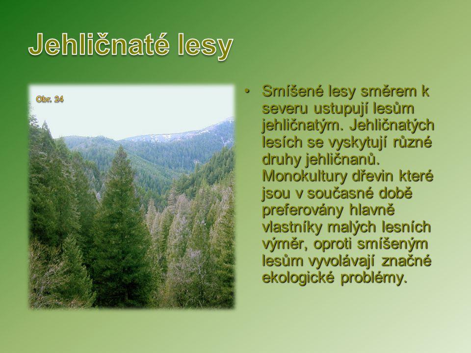 Smíšené lesy směrem k severu ustupují lesům jehličnatým. Jehličnatých lesích se vyskytují různé druhy jehličnanů. Monokultury dřevin které jsou v souč
