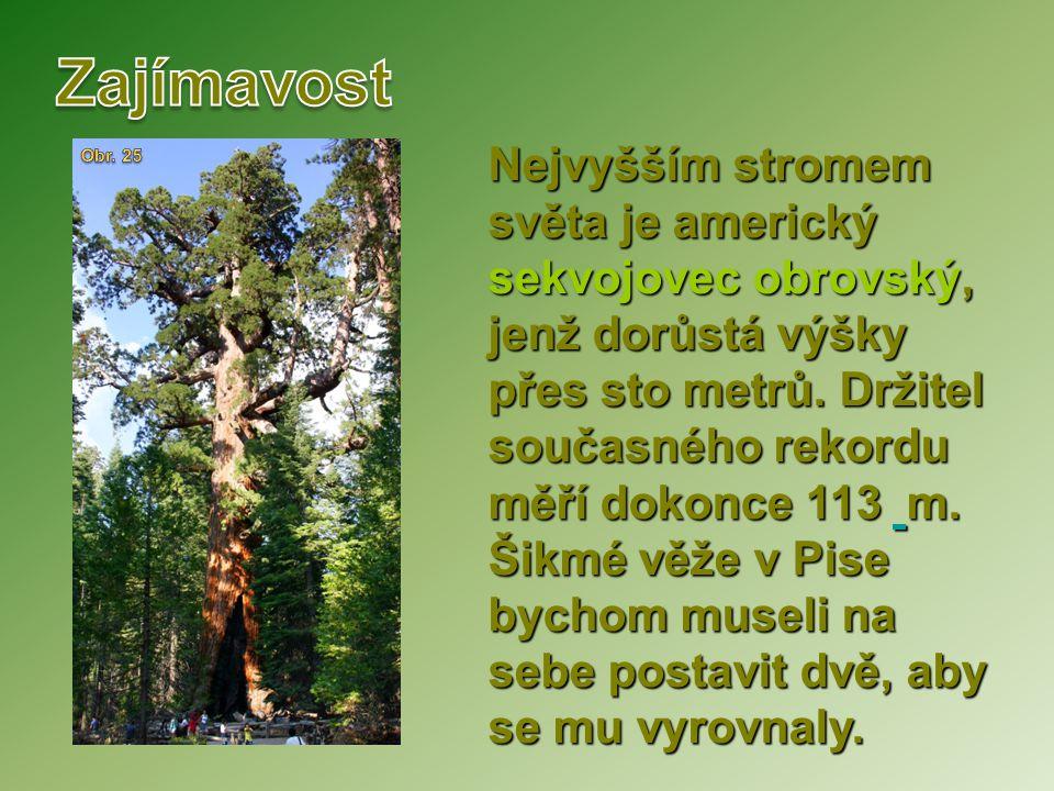 Nejvyšším stromem světa je americký sekvojovec obrovský, jenž dorůstá výšky přes sto metrů. Držitel současného rekordu měří dokonce 113 m. Šikmé věže