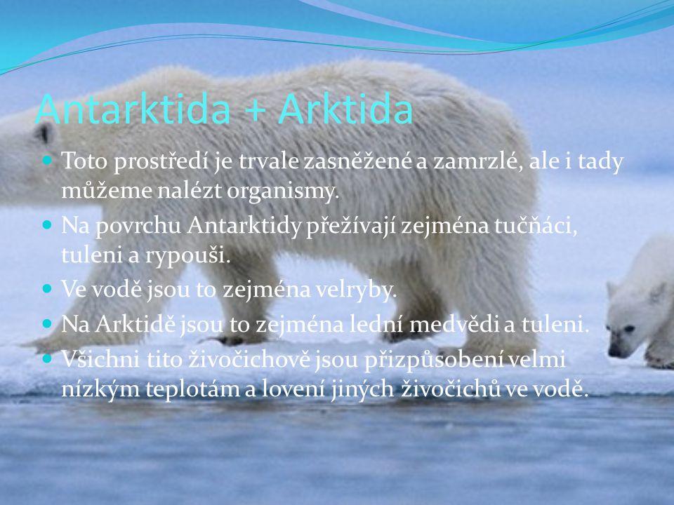 Antarktida + Arktida Toto prostředí je trvale zasněžené a zamrzlé, ale i tady můžeme nalézt organismy. Na povrchu Antarktidy přežívají zejména tučňáci