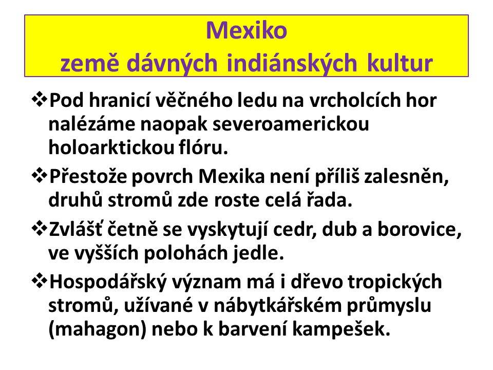 Mexiko země dávných indiánských kultur  Pod hranicí věčného ledu na vrcholcích hor nalézáme naopak severoamerickou holoarktickou flóru.  Přestože po